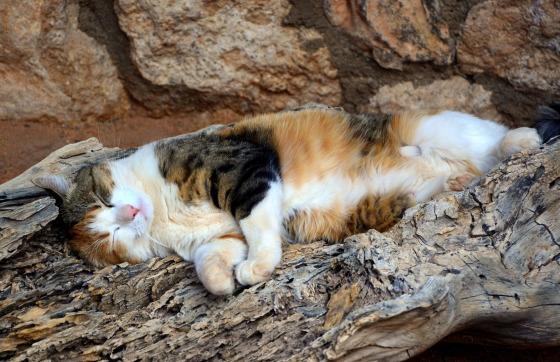 cat-4004746_1920