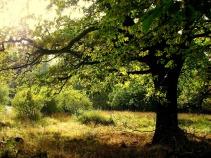Sabine Löwer oak-1605710_1920