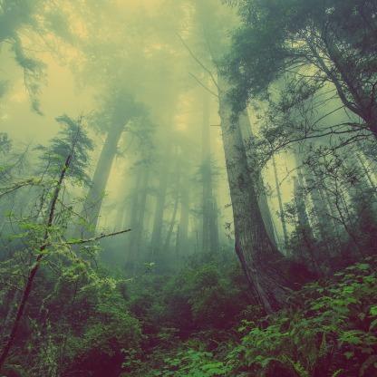 Höhle forest-931706_1920